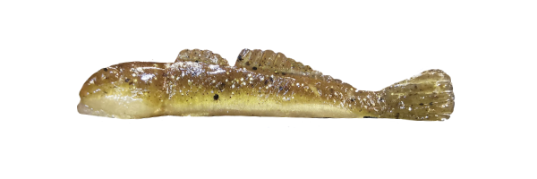 Natural Goby/Silver (G001-011)